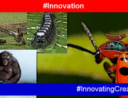 Innovation and nature