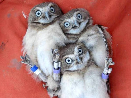 Super B_owl